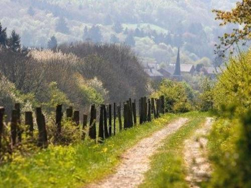Randonnée en Ardenne
